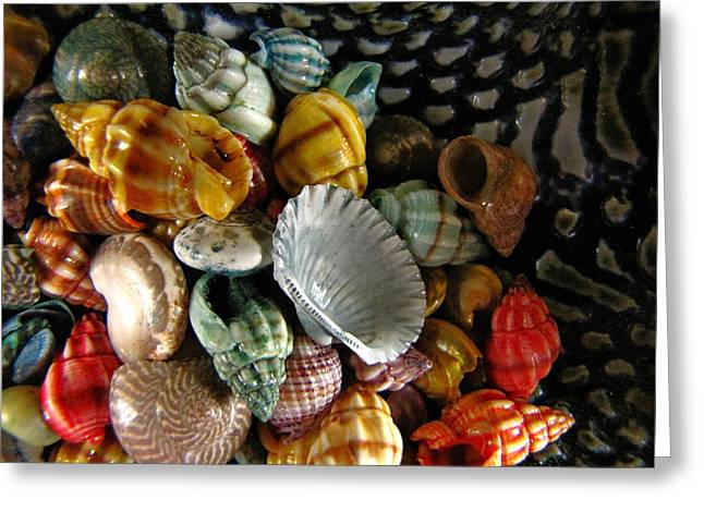 Sea Shells Greeting Card by Lori Miller
