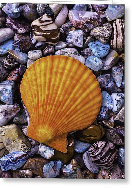 Sea Shells On Colorful Rocks Greeting Card by Garry Gay