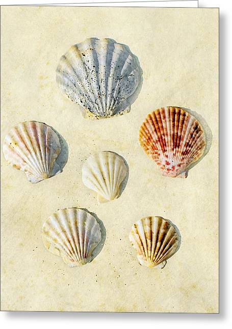 Sea Shells Greeting Card by Paul Grand