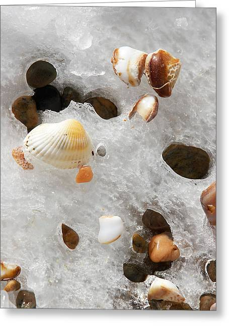 Sea Shells Rocks And Ice Greeting Card by Matt Suess