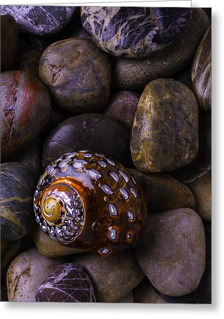 Sea Snail Shell On Rocks Greeting Card by Garry Gay