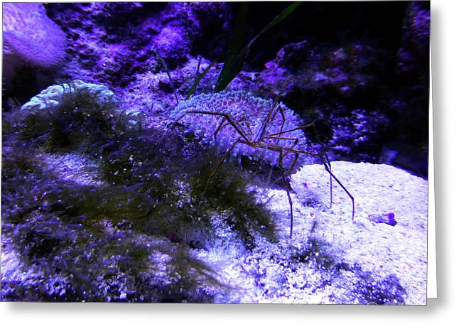 Sea Spider Greeting Card