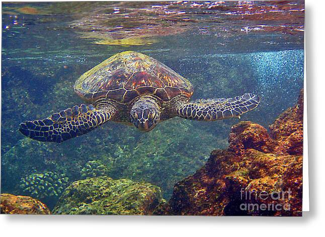 Sea Turtle - Close Up Greeting Card
