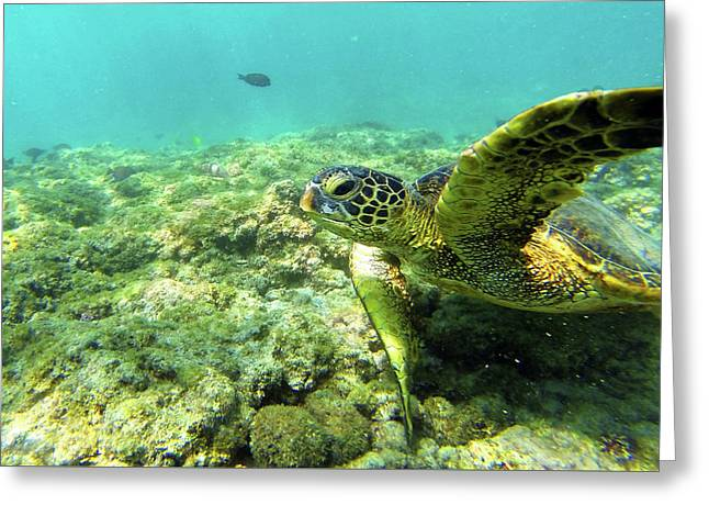 Greeting Card featuring the photograph Sea Turtle #2 by Anthony Jones