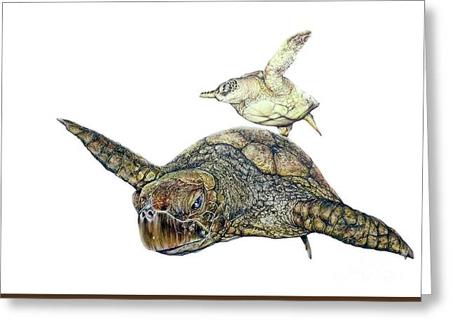 Sea Turtle 4 Greeting Card