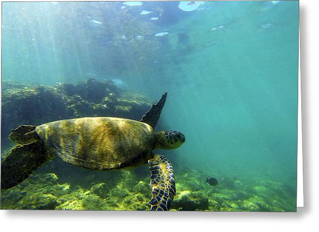Greeting Card featuring the photograph Sea Turtle #5 by Anthony Jones
