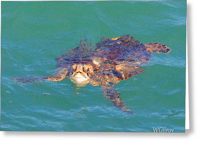 Sea Turtle / Cocoa Beach Greeting Card
