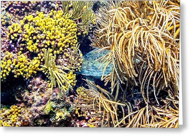 Greeting Card featuring the photograph Sea Turtle Hiding by Perla Copernik