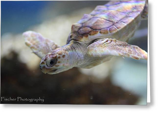 Sea Turtle  Greeting Card by Kyle Fischer