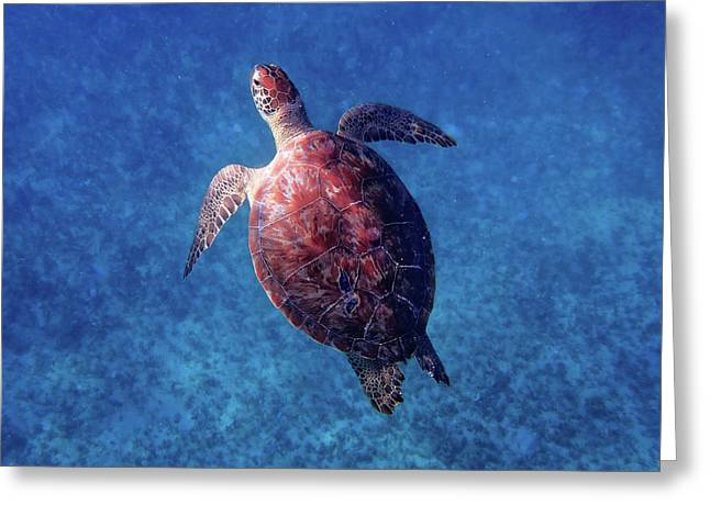 Greeting Card featuring the photograph Sea Turtle by Lars Lentz