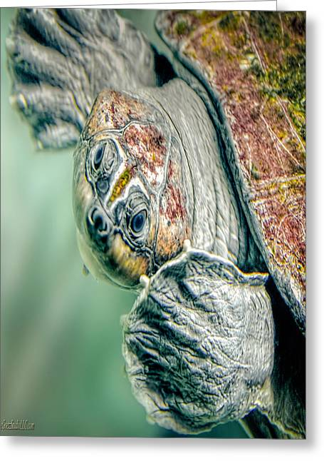 Sea Turtle Nature Wear Greeting Card