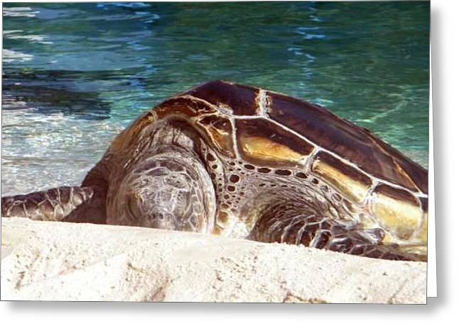 Greeting Card featuring the photograph Sea Turtle Resting by Amanda Eberly-Kudamik