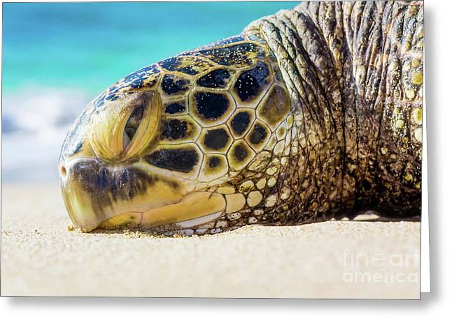 Sea Turtle Resting At The Beach Greeting Card
