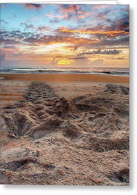 Sea Turtle Trails Greeting Card