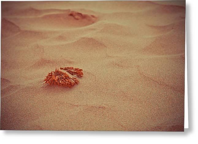 Sea Urchin Ashore Greeting Card