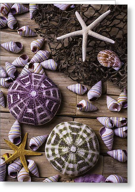 Sea Urchins With Starfish Greeting Card by Garry Gay