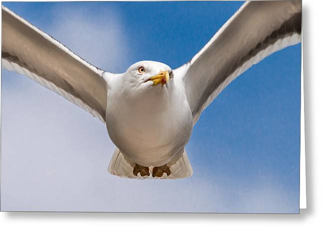 Seabird Closeup Greeting Card