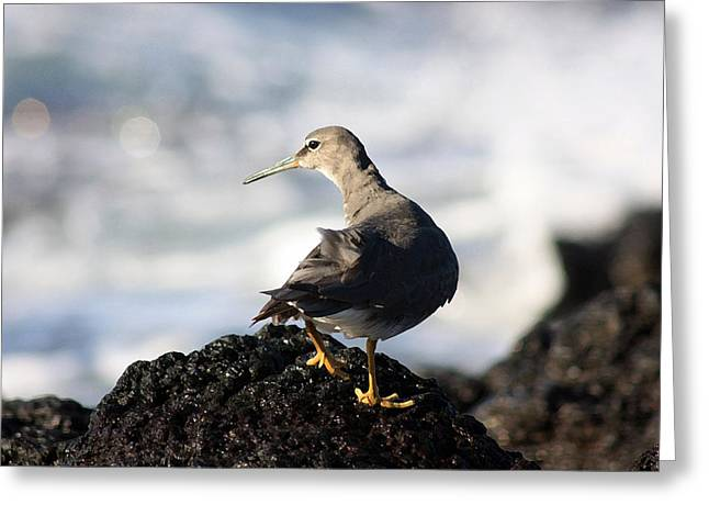 Seabird Greeting Card by Mary Haber