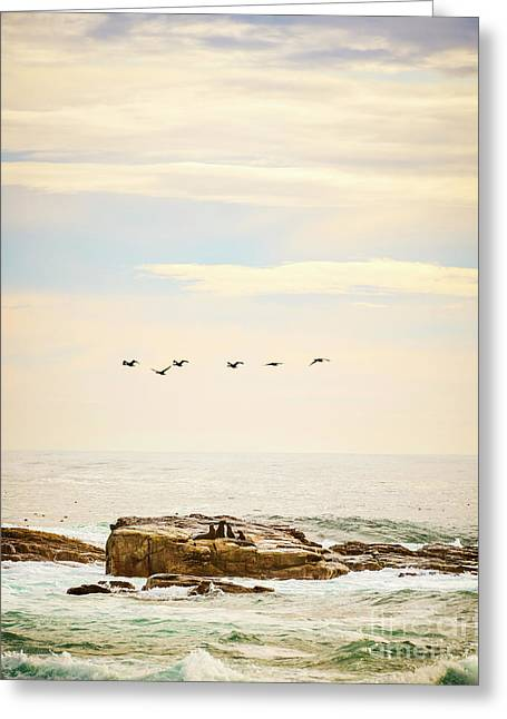 Seabirds And Seals Greeting Card by Tim Hester