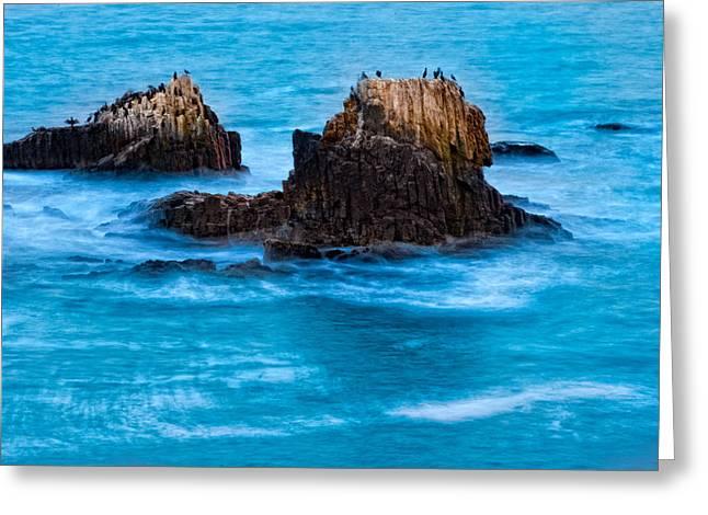 Seabirds On Rocks Greeting Card by Utah Images