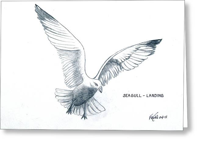 Seagull - Landing Greeting Card by Frederic Kohli