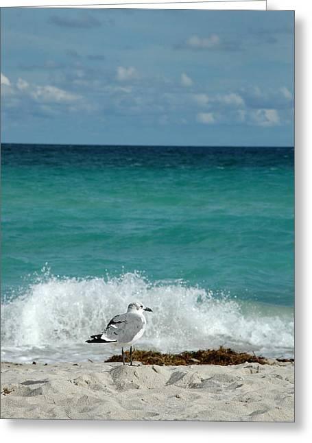 Seagull - South Beach Miami Greeting Card
