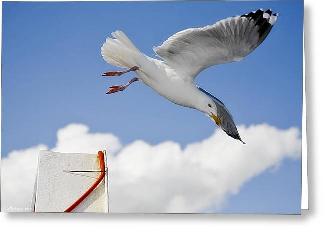 Seagull  Above Ferryboat Greeting Card by Isaac Silman