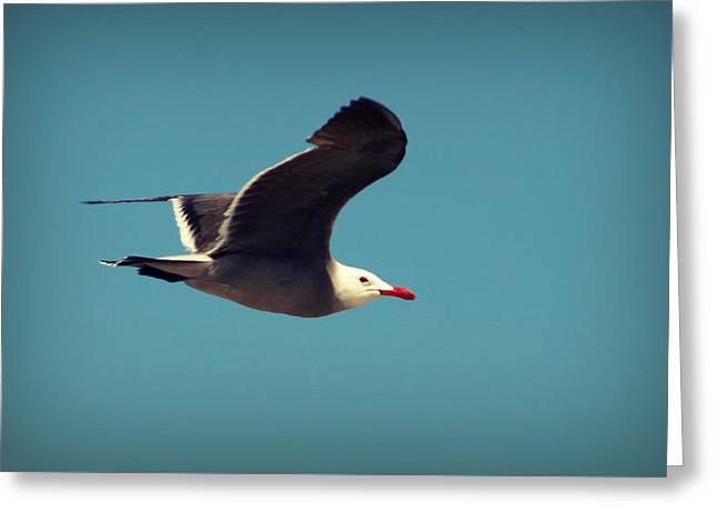 Seagull Aflight Greeting Card