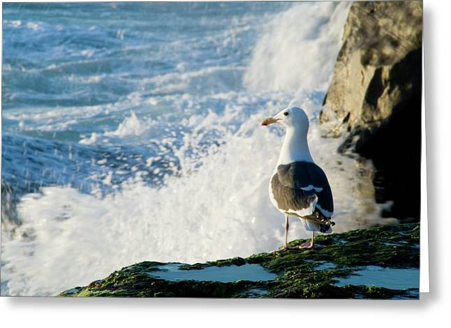 Seagull And The Sea Greeting Card