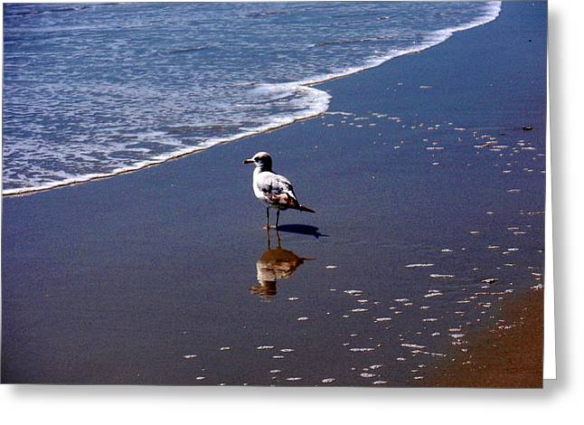 Greeting Card featuring the photograph Seagull At Myrtle Beach  by Beth Akerman