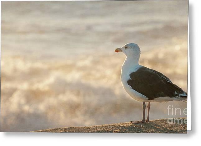 Seagull At Sunrise Greeting Card