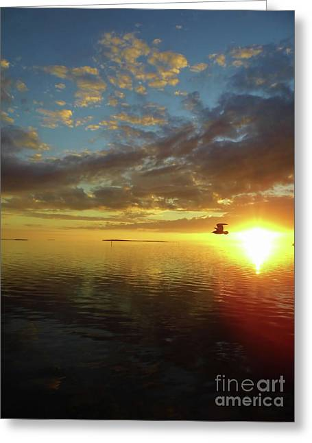 Seagull At Sunset Greeting Card by D Hackett
