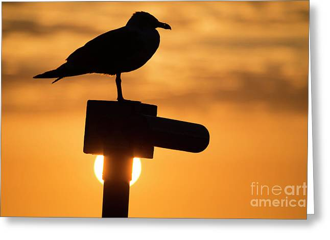 Seagull At Sunset Greeting Card