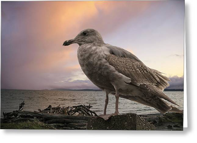 Seagull At Sunset Greeting Card by Lorraine Baum