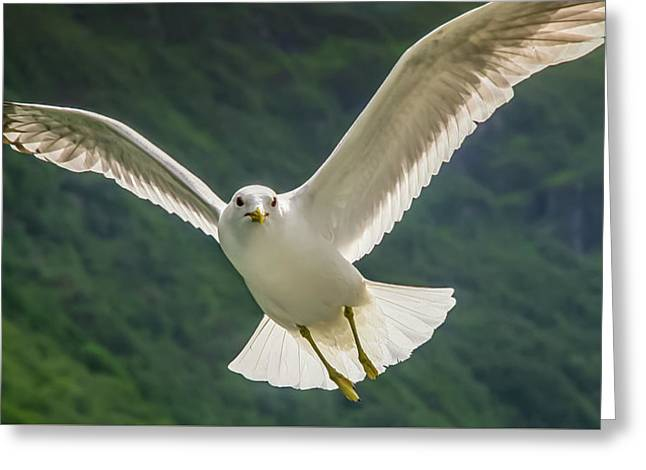 Seagull At The Fjord Greeting Card