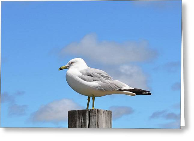Seagull Beach Art - Sitting Pretty - Sharon Cummings Greeting Card
