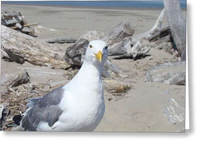 Seagull Bird Art Prints Coastal Beach Driftwood Greeting Card by Baslee Troutman