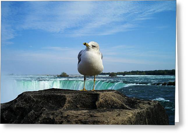 Seagull Checking Out The Photographers Greeting Card