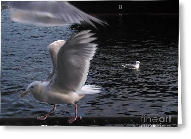 Seagull Circus Greeting Card