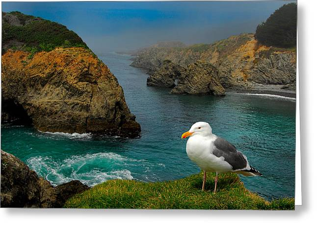 Seagull Coast Greeting Card by Harry Spitz