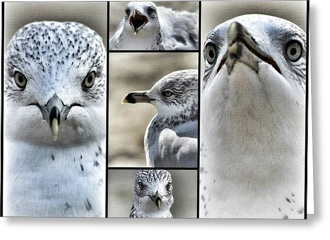 Seagull Collage Greeting Card