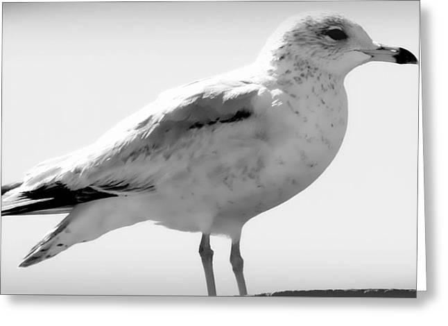 Seagull  Greeting Card by Debra Forand