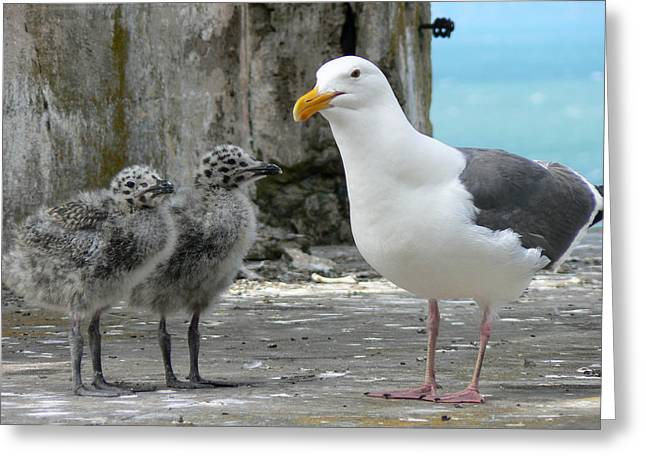 Seagull Family Greeting Card by Laurel Powell