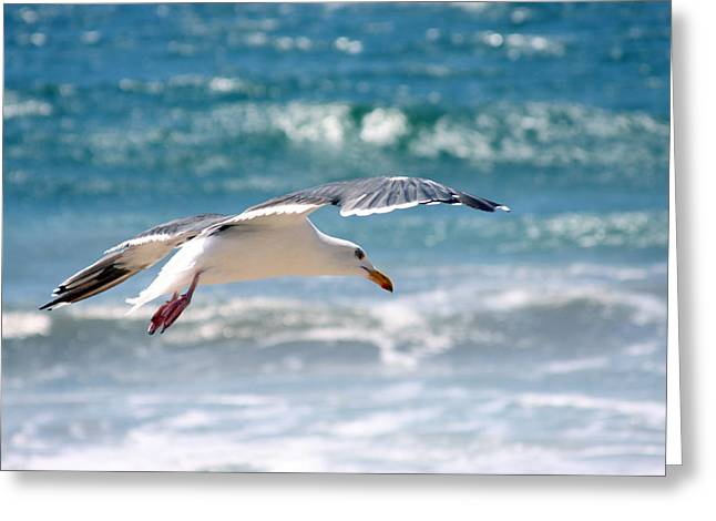 Seagull Flight Greeting Card by Stormshade Designs