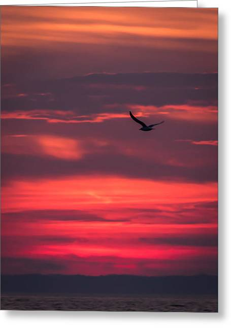 Seagull Flying At Sunset Jersey Shore Greeting Card