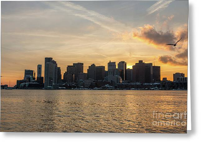 Seagull Flying At Sunset With The Skyline Of Boston On The Backg Greeting Card