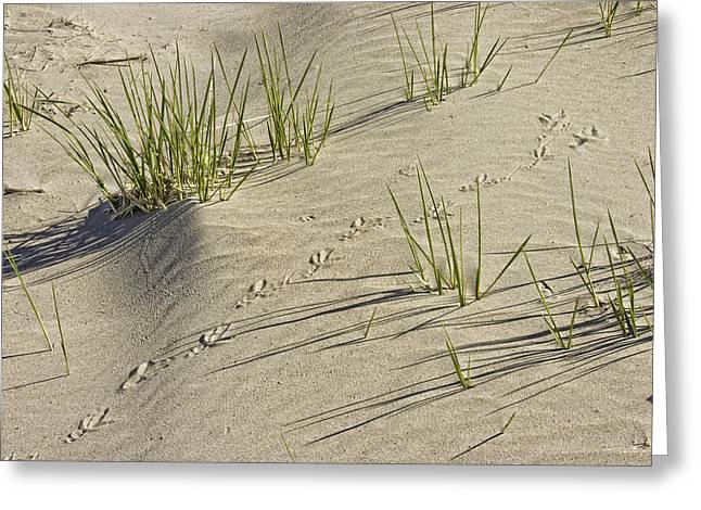 Seagull Footprints And Beach Grass Popham Beach Maine Greeting Card by Keith Webber Jr