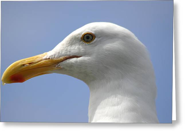 Seagull Greeting Card by Hans Jankowski