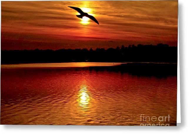 Seagull Homeward Bound Greeting Card by Carol F Austin