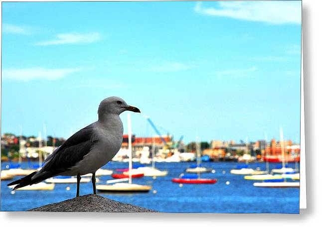 Seagull In Boston Harbor Greeting Card by Andrew Dinh